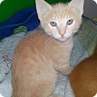 Adopt A Pet :: Tanner - Irvine, CA