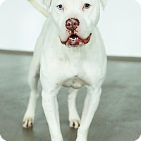 Adopt A Pet :: Aspen *FOSTER* - Appleton, WI