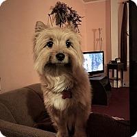 Adopt A Pet :: Leo - Chalfont, PA