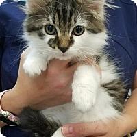 Adopt A Pet :: Charlie & Kristofur - Knoxville, TN