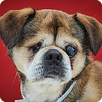 Adopt A Pet :: Dudley - Anaheim, CA