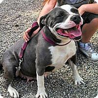 Adopt A Pet :: Mia - Seattle, WA