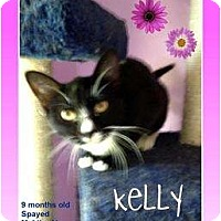 Adopt A Pet :: Kelly - Mobile, AL