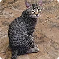Adopt A Pet :: Ben - Redding, CA