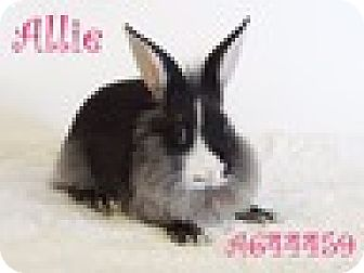 Other/Unknown Mix for adoption in Paramount, California - Allie