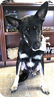German Shepherd Dog Mix Dog for adoption in Walnut Creek, California - Michonne