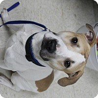 Adopt A Pet :: Cyrus - Muskegon, MI