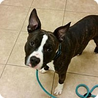 Adopt A Pet :: Drake - Reisterstown, MD