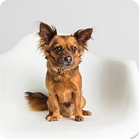 Adopt A Pet :: Chico - Ogden, UT