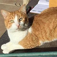 Adopt A Pet :: *CALEB - Sacramento, CA