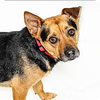 Adopt A Pet :: Larry - San Luis Obispo, CA