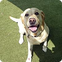 Adopt A Pet :: Landon - Buckeystown, MD