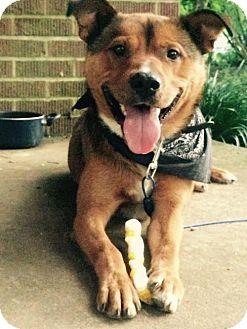 Hound (Unknown Type) Mix Dog for adoption in Nashville, Tennessee - Buddy