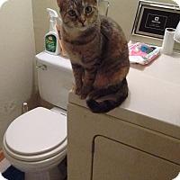 Adopt A Pet :: Mama (COURTESY POST) - Baltimore, MD