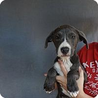 Adopt A Pet :: Dioji - Oviedo, FL