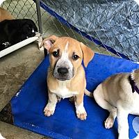 Adopt A Pet :: Carnie - Hohenwald, TN