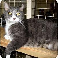 Adopt A Pet :: Eddie - Deerfield Beach, FL