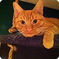 Adopt A Pet :: Henry (LE) - Little Falls, NJ