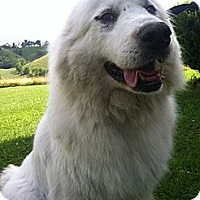 Adopt A Pet :: Keta - Honaker, VA