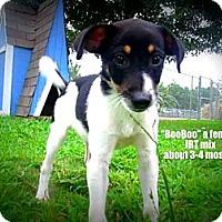 Adopt A Pet :: Booboo - Gadsden, AL