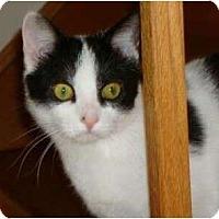 Adopt A Pet :: Gabby - Port Republic, MD