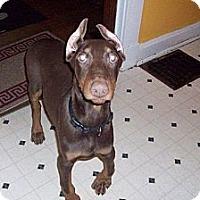 Adopt A Pet :: Dexter--adopted! - New Richmond, OH