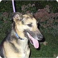 Adopt A Pet :: Arwen - Marysville, OH