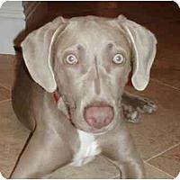 Adopt A Pet :: Abbey - Eustis, FL