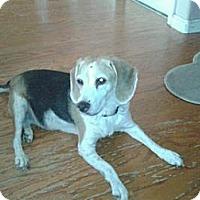 Adopt A Pet :: Izzy Belle - Phoenix, AZ