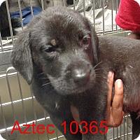 Adopt A Pet :: Aztec - Greencastle, NC