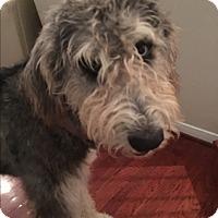 Adopt A Pet :: Jovi - Dallas, TX