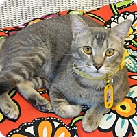 Adopt A Pet :: Henley - The Colony, TX
