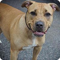Adopt A Pet :: Marley - Framingham, MA
