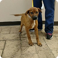 Adopt A Pet :: Melly - Oviedo, FL