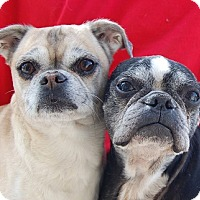 Adopt A Pet :: Rocky - Las Vegas, NV