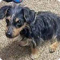 Adopt A Pet :: Chewy - Sudbury, MA