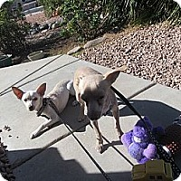 Adopt A Pet :: Frostie Only $25 adoption fee! - Litchfield Park, AZ