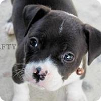 Adopt A Pet :: Hefty - Justin, TX