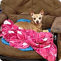 Adopt A Pet :: WOODY - Bluff city, TN