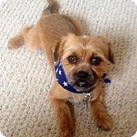 Adopt A Pet :: Benson - Clarksville, TN