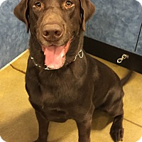Adopt A Pet :: Beast - Orlando, FL