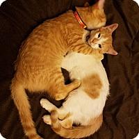 Adopt A Pet :: Buttons(woodbury petsmart) - Roseville, MN