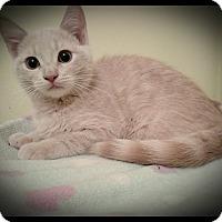 Adopt A Pet :: Butterbean (adoption pending) - Richmond, VA