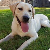 Adopt A Pet :: Taffy - Denton, TX
