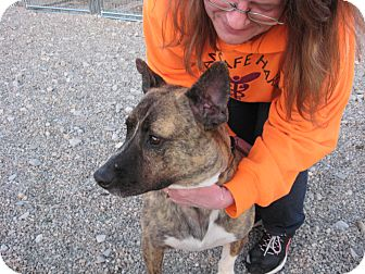 Shepherd (Unknown Type)/Boxer Mix Dog for adoption in Port Clinton, Ohio - SIMBA