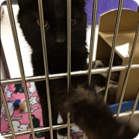 Adopt A Pet :: Salem - Byron Center, MI