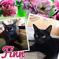 Adopt A Pet :: Finn - Keller, TX