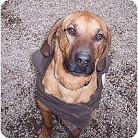 Adopt A Pet :: Rex - Douglas, MA