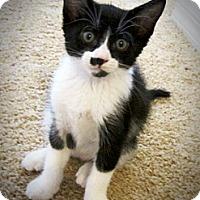 Adopt A Pet :: Michael - Seminole, FL