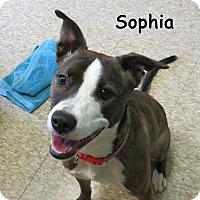Adopt A Pet :: Sophia - Warren, PA